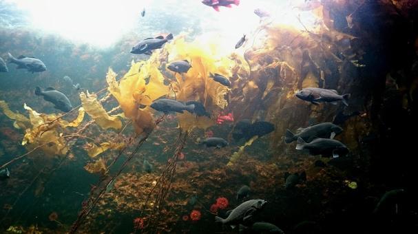 Seaweed and fish