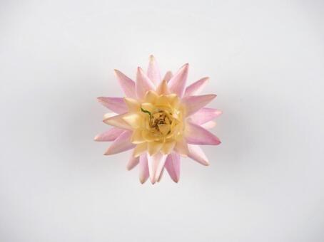 Dry Flower 04