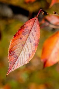 Dead leaves 4