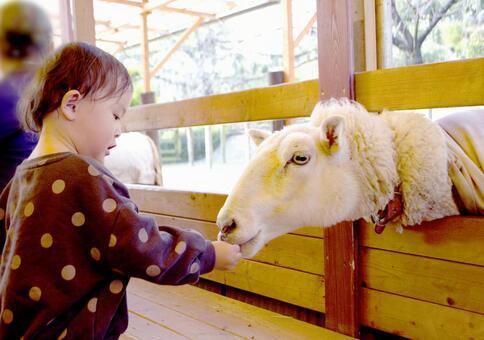 Children interacting with animals