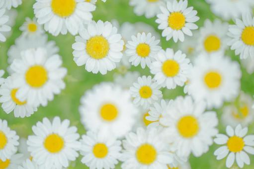 Fantastic flowers 114
