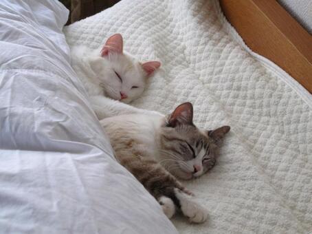 Cat couple sleeping on bed