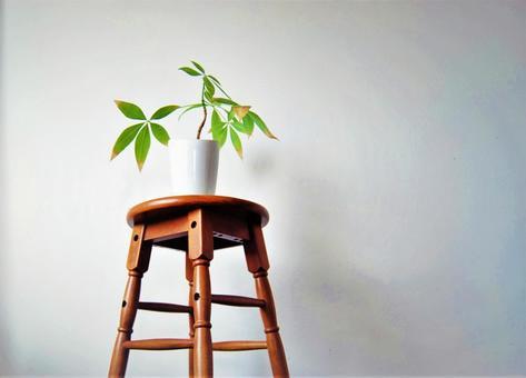 Houseplant stool pakira green wood grain magazine, indoor, nail, reform, diy, wall, interior, photograph, floor, tea, wood, architecture, processing, background, brown, america, plank, wood grain, western style, interior, europe, wallpaper, Image, wood, design, antique, pattern, renovation,