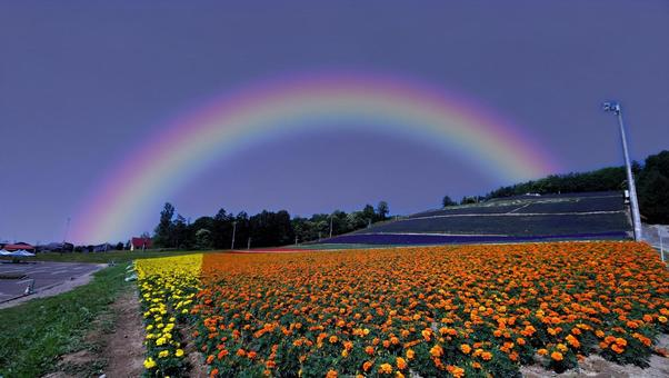 비 에이의 꽃밭에 걸려있는 일곱 빛깔 무지개