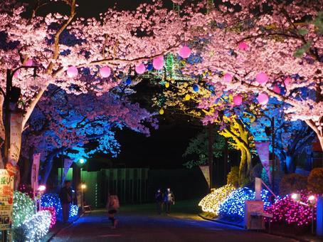 Cherry blossoms at an amusement park