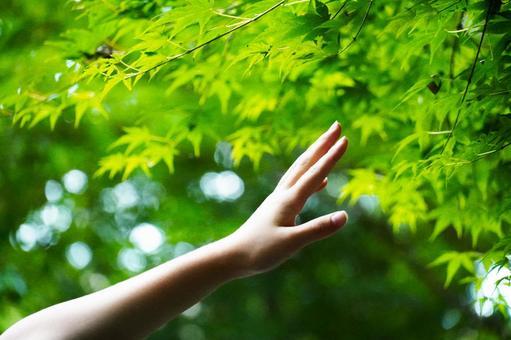 Summer green hand