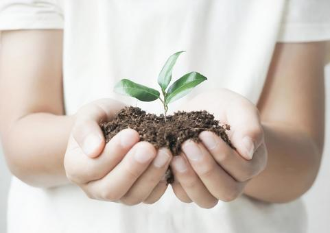 Child's hands and plant sprouts
