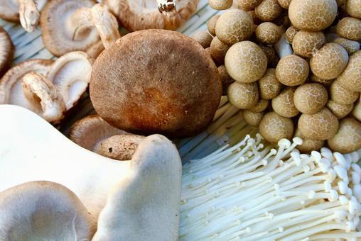 버섯 표고 버섯 송이 버섯 팽이 버섯 새송이 버섯