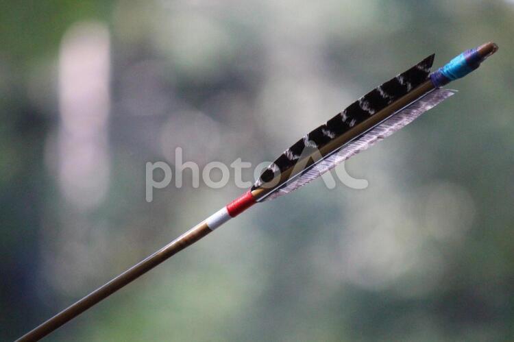 矢羽の写真