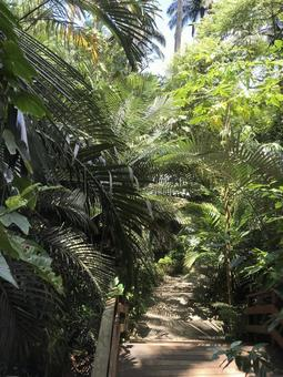 오키나와 정글