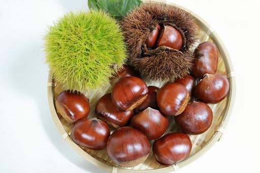 Chestnut background white chestnut