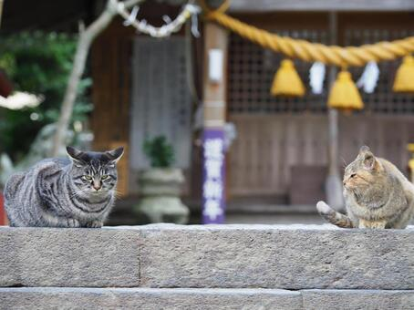 Hagi, Itsukushima Shrine cat