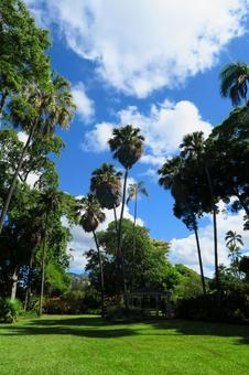Hawaiian Landscape (92) Foster Botanical Garden