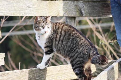 바라 보는 도둑 고양이