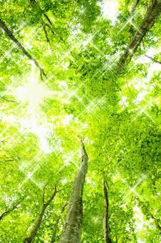 Glittering beech forest freshwater