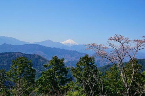 후지산과 벚꽃 카오산의 전망대에서 경치 봄