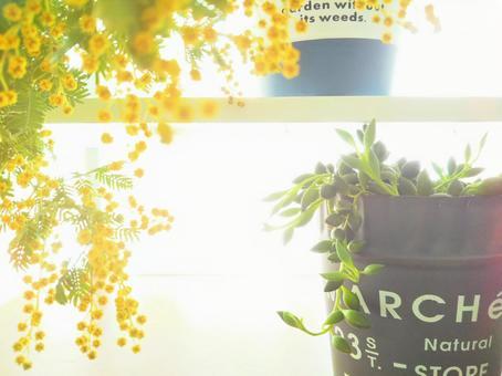 미모사와 관엽 식물