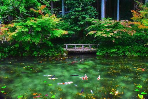 비오는 날 모네의 연못