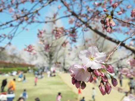 봄의 공원