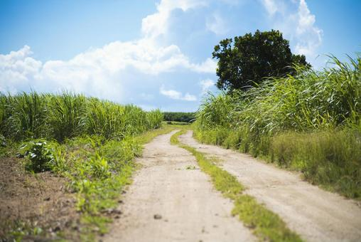Okinawa Sugar Road Sugar Cane Field
