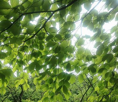 Harmony of fresh green and light
