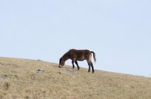 野生馬40