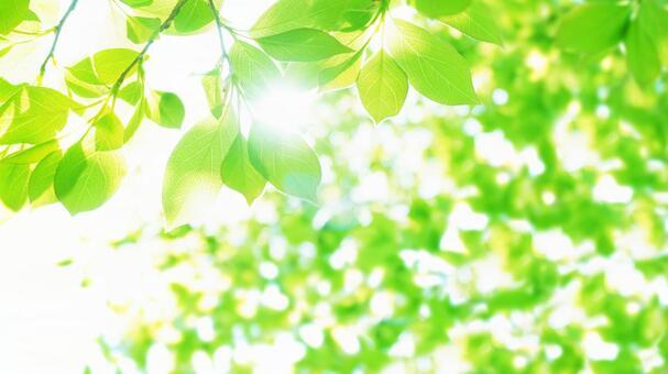 Summer fresh green sunbeams Natural background