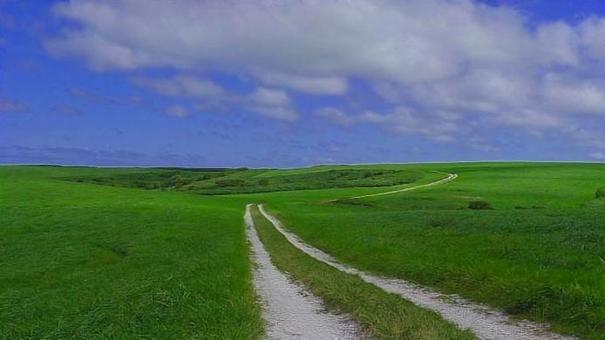 贝壳的白色路