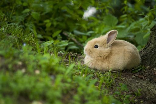 踞る子 토끼
