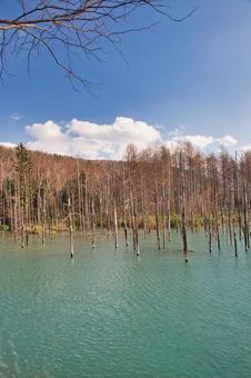 Hokkaido, Biei Town, Shirogane Blue Pond
