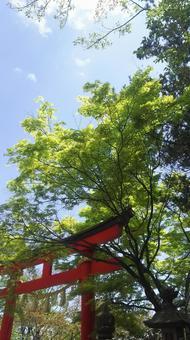 Torii, green and blue sky