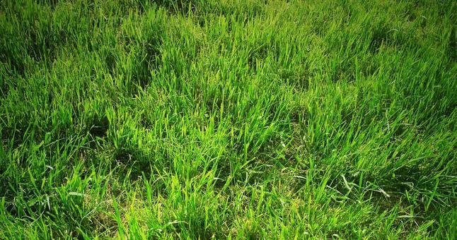 Lawn_background_76
