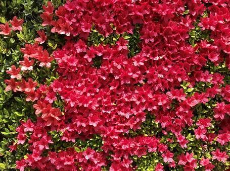 울타리 장식 붉은 꽃