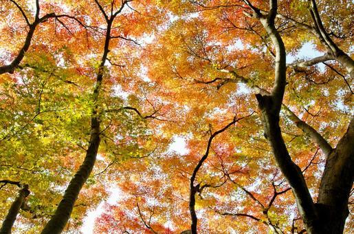 Fall scenery 3