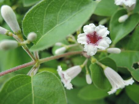 흰 꽃 1 9 월 촬영