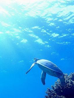 호흡을 오르는 거북이