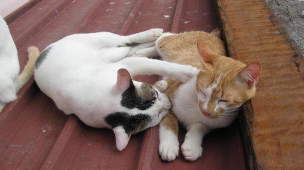 Kuching kitten 11