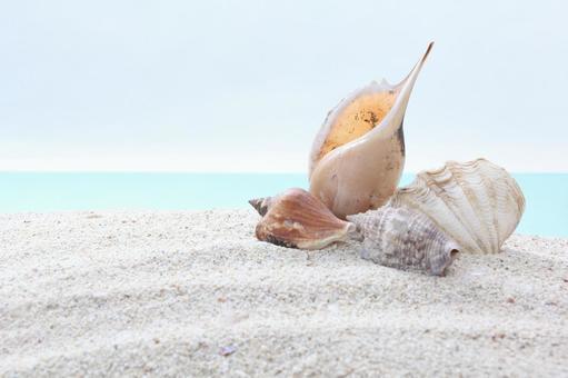 해변 조개 32