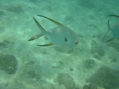 Palau sea