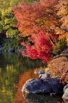Fall scenery 15
