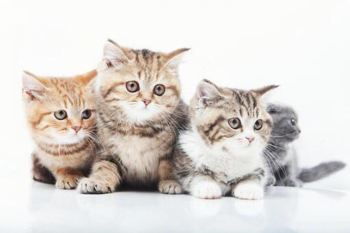 Four cats 3