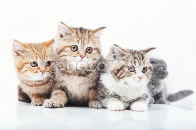 4匹のネコ3の写真
