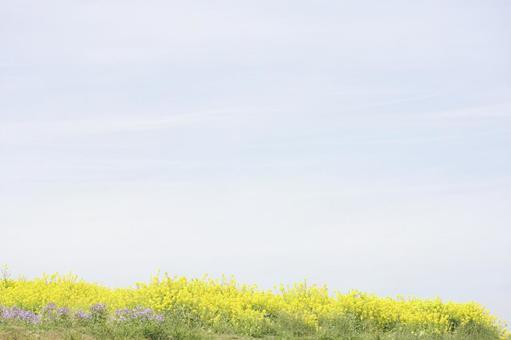 아와 꽃 관람석 20