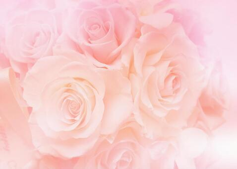 Roses _ Background