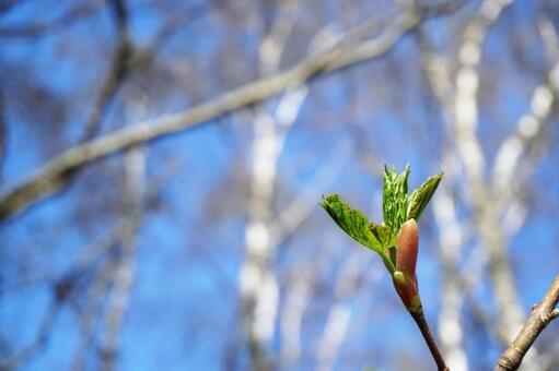 Spring breath 3/3