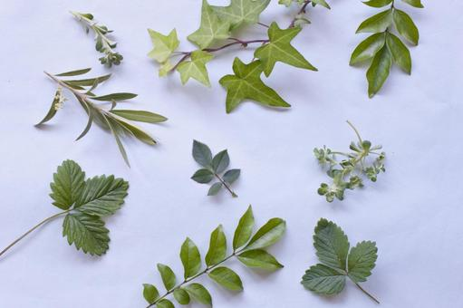 여러가지 나뭇잎