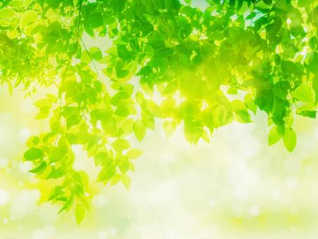 Abstract background of fresh green sunbeams image