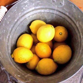 Bucket lemon