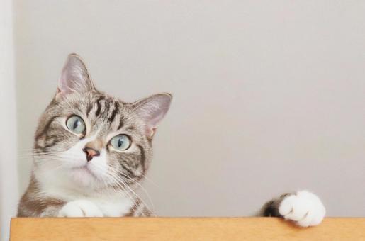 고양이 고양이 고양이 고양이 사진 웃는 고양이 응시 고양이 보는 고양이