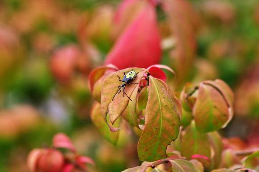 Autumn leaves and stink bug 3 Larva of stink bug
